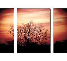 Sunset triptych with birch- February by littlewingphoto
