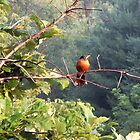 Good Morning Robin by Mary Kaderabek-Aleckson