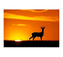 Roe Deer At Dusk Photographic Print