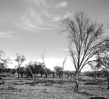 Basic Bush © Western Queensland by Vicki Ferrari