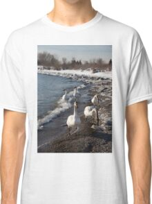Family Walk on the Beach - Wild Trumpeter Swans, Lake Ontario, Toronto Classic T-Shirt