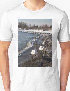 Family Walk on the Beach - Wild Trumpeter Swans, Lake Ontario, Toronto T-Shirt