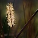 In the Tall Grass by Jennifer Potter