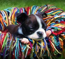 Digital Painting of a baby Boston Terrier by capturingsmiles
