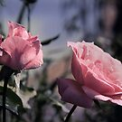 Two Roses by Jay Reed