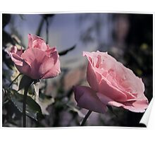Two Roses Poster