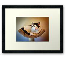 Mister Max Framed Print