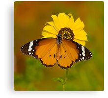 The Butterfly and Yellow Flower-Sequel#2 Canvas Print