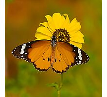 The Butterfly and Yellow Flower-Sequel#2 Photographic Print