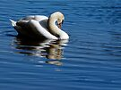 swan on the water by tego53