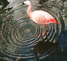 Flamingo Creating Ever decreasing circles by MichelleRees