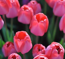 Tulips en masse by threadworks