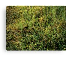 The Grass Is Always Greener. Canvas Print