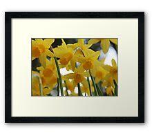 Golden Spring Framed Print