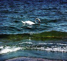 Swan Lake by Ellen Cotton