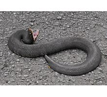 Snake at Ghost River Photographic Print