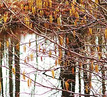 Catkins, Alabama, New York by artwhiz47