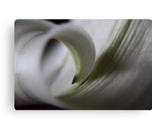 curl ... Canvas Print