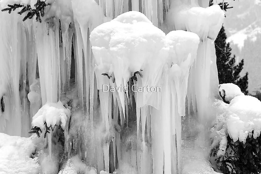 Frozen tree, Grindelwald, Switzerland by buttonpresser