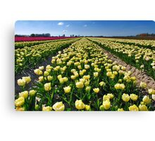 More tulips from Flakkee Canvas Print