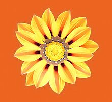 African Daisy / Gazania - Orange and Yellow by Marymarice