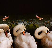 Busy swans with Lotos by pahit