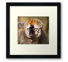 Gorgeous Eyes Framed Print