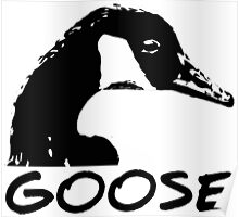 Canadian Goose Black and White Poster