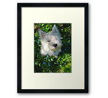 Puppy in the Patch Framed Print