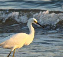 Snowy Egret - Egretta thula Sticker