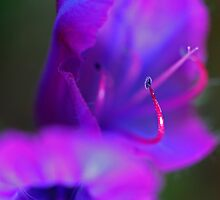 Fairies by TaniaLosada