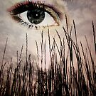 Grassy Eye In The Sky by Brandi Beddingfield