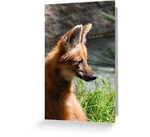 Handsome Maned Wolf Greeting Card