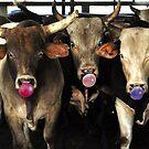 Bubble Gum Blowing Rodeo Bull Cows Western pop Art Southwest Cowboy culture by Rick Short