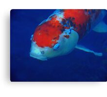 Orange and White Koi Fish Canvas Print