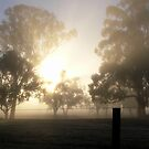 First rays of day by Julie Sleeman
