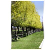 Willows In Spring Poster
