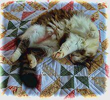 Lazy Cat by photosbypamela