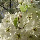 closeup of white flowers by takemeawaycn