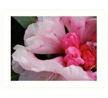 rhododendron.. Art Print