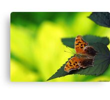Question For You Canvas Print