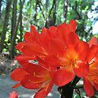 flower by Douglas Alan Photography