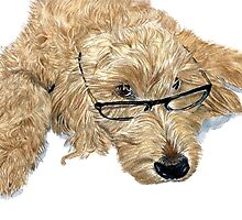 Goldendoodle by Yvonne Carter