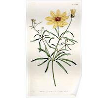 The Botanical magazine, or, Flower garden displayed by William Curtis V5 v6 1792 1793 0025 Coreopsis Verticillata, Whorled Coreopsis Poster