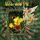 Bearded Iris by Elaine Game