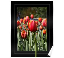 A Dutch Tulip for You  Poster