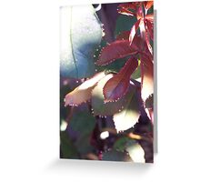Faeries in the Garden Greeting Card