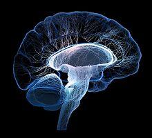 Human brain complexity - Conceptual by johanswanepoel