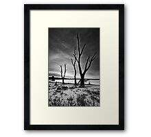 The Once Majestic Gum Framed Print