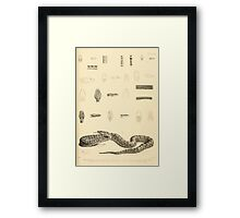 The Reptiles of British India by Albert C L G Gunther 1864 0527 Snakes Framed Print
